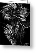 Flower In Black-and-white Greeting Card