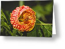 Flower In Red And Yellow  Greeting Card