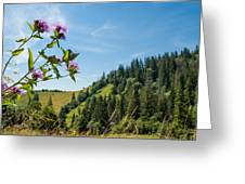 Flower In The Carpathians Greeting Card