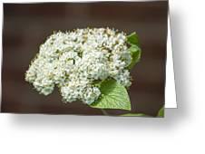 Flower In The Spotlight Greeting Card