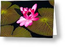 Flower In Water Greeting Card