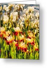 Flower - Iris - Mildred Presby 1923 Greeting Card by Mike Savad