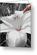 Flower Isolate Greeting Card