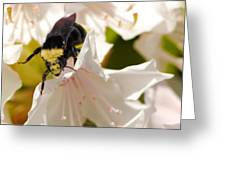 Flower King Greeting Card