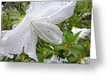 Flower Laced With Rain Drops Greeting Card