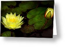 Flower - Lily - Morning Showers Greeting Card