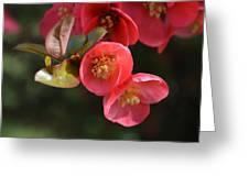 Flower Love Greeting Card by Sheldon Blackwell