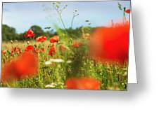Flower Meadow In Summer With Red Poppy Greeting Card