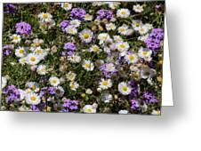 Flower Mix - Purple And White Greeting Card