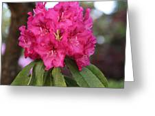 Flower Of Capilano Greeting Card