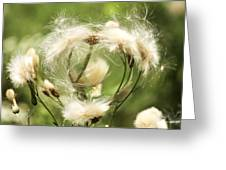 Flower Of Love Greeting Card