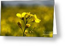 Flower Of Oil  Greeting Card