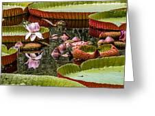 Flower Of Victoria Cruziana Greeting Card