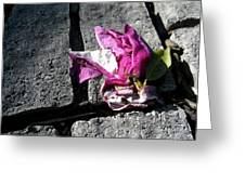 Flower On Stone Greeting Card