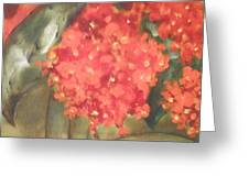 Flower On The Wall Greeting Card