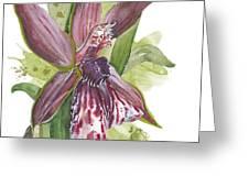 Flower Orchid 10 Elena Yakubovich Greeting Card by Elena Yakubovich
