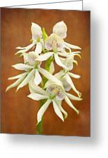 Flower - Orchid - A Gift For You  Greeting Card