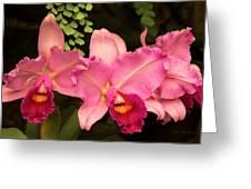 Flower - Orchid -  Cattleya - Magenta Splendor Greeting Card