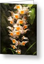 Flower - Orchid - Dendrobium Orchid Greeting Card