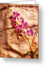 Flower - Orchid - Just Splendid Greeting Card
