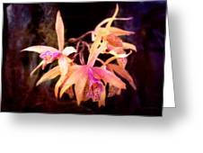 Flower - Orchid - Laelia - Midnight Passion Greeting Card