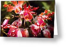 Flower - Orchid - Oncidium Orchid - Eye Candy Greeting Card