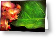 Flower - Orchid - Phalaenopsis Orchids At Rest Greeting Card