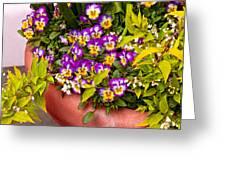Flower - Pansy - Purple Posies  Greeting Card by Mike Savad