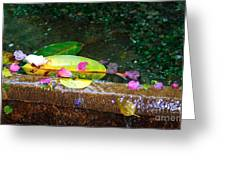 Flower Petals And Leaves Greeting Card
