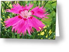 Flower Pink Greeting Card