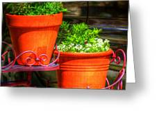 Flower Pots 6103 Greeting Card
