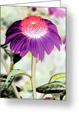 Flower Power 1357 Greeting Card