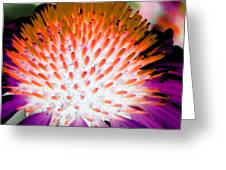 Flower Power 1358 Greeting Card