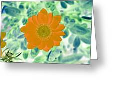 Flower Power 1433 Greeting Card