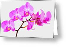 Flower Purple Orchid  Greeting Card