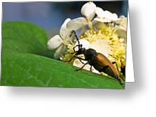 Flower Rise Over Beetle Greeting Card