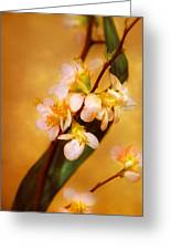 Flower - Sakura - A Touch Of Spring Greeting Card