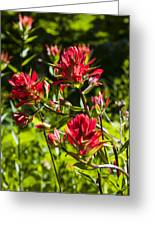 Flower Greeting Card by Scott Gould