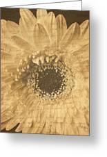 Flower Secrets Greeting Card