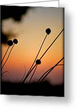 Flower Silhouettes I Greeting Card