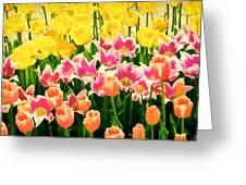 Flower Splash Ix Greeting Card