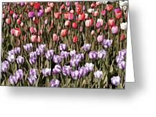 Flower Splash Vi Greeting Card