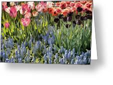 Flower Splash Viii Greeting Card
