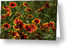 Texas Indian Blanket -  Luther Fine Art Greeting Card