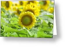 Flower - Texas Sunflower Field 1 - Luther Fine Art Greeting Card