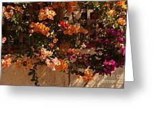 Flower Trellis In La Jolla Greeting Card