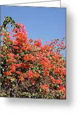 flower wall in Madagascar Greeting Card