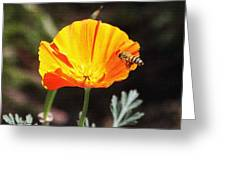 Flower With Honey Bee Greeting Card