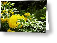 Flower - Austin Botanical Gardens -  Luther Fine Art Greeting Card