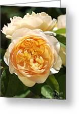 Flower-yellow Roses Greeting Card